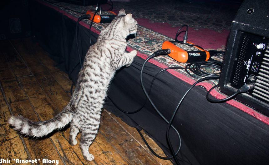 חתול הצלילים של רמירז. צילום: שיר אלוני
