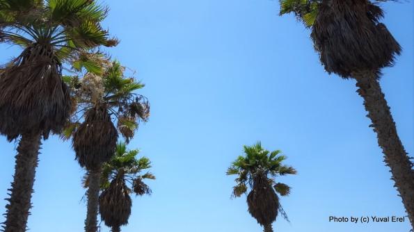 שמיים בגבעת העלייה, יפו. צילום יובל אראל
