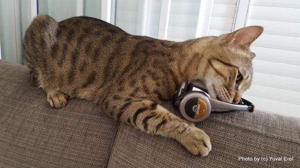 חתול הצלילים. צילום: יובל אראל